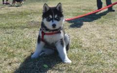 Dog Jog raises money for local animal shelter