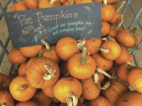 Nelson's Pumpkin Patch in Emerado, N.D. sells pumpkins such as these during the fall season.