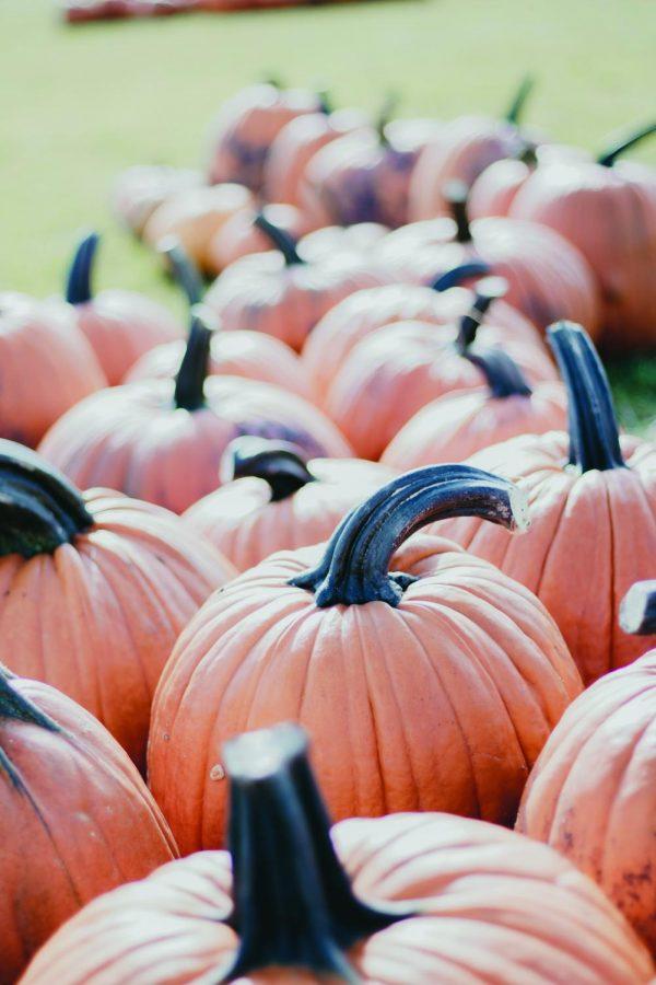 Enjoying the Fall Festivities