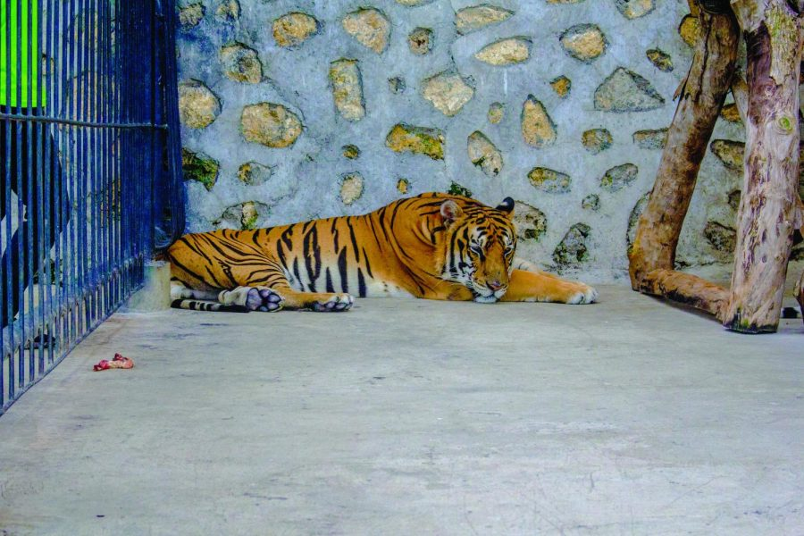 _Tiger King_ Unsplash
